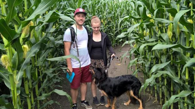 Hund im Mais groß