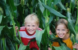 Kinder im Mais